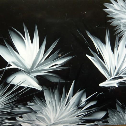 P1260527 weiße Blüten auf schwarz (Andere)