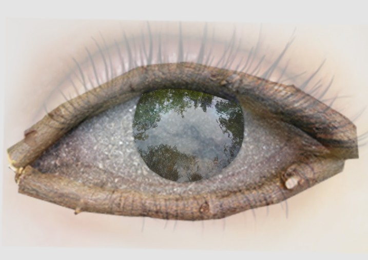 Auge (Andere)